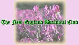 New England Botanical Club