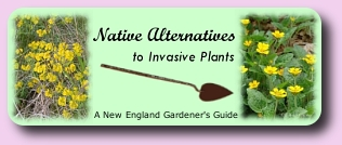 Native Alternatives to Invasive Plants